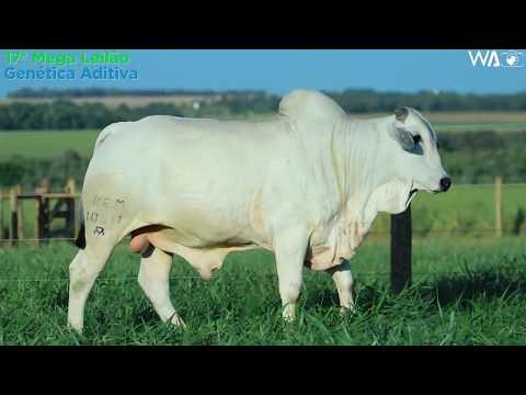 LOTE 112  - REM 10311 - 17º Mega Leilão Genética Aditiva 2020