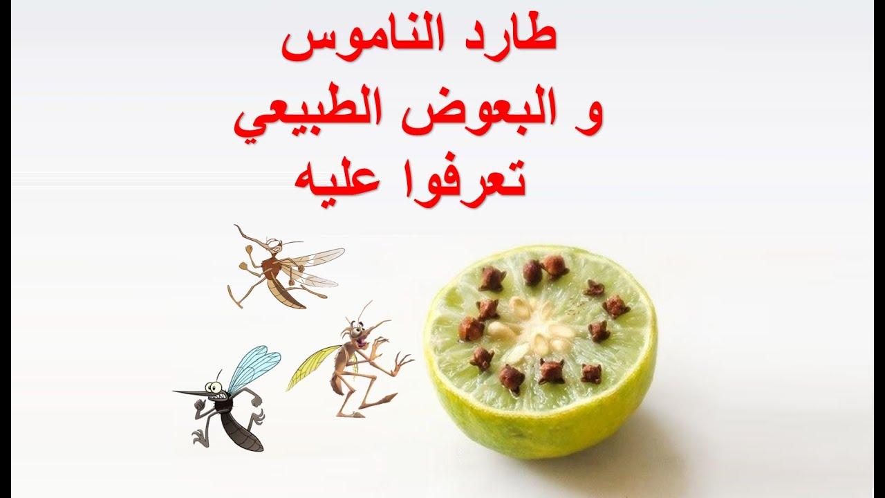 تخلص من الناموس و الباعوض دون إستعمال المبيدات  و بمكونين طبيعيين فقط لتنعم بنوم هادئ
