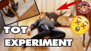NALAS REAKTION - ICH STELLE MICH TOT!! | REAKTION EINER KATZE! KRASSES EXPERIMENT!