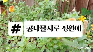 #베란다 정원 #베란다 텃밭 #콩나물시루 정원