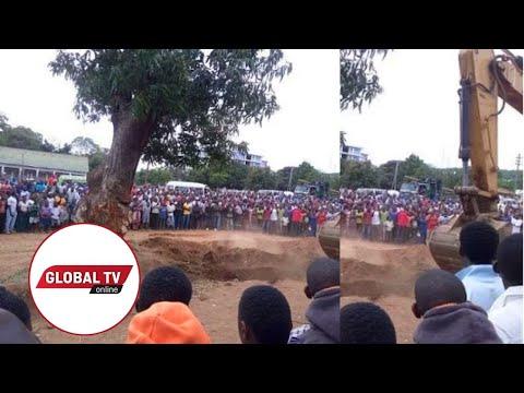 Mwanza:  Maajabu ya Mti Kupiga Kelele Ukipinga Kung'olewa