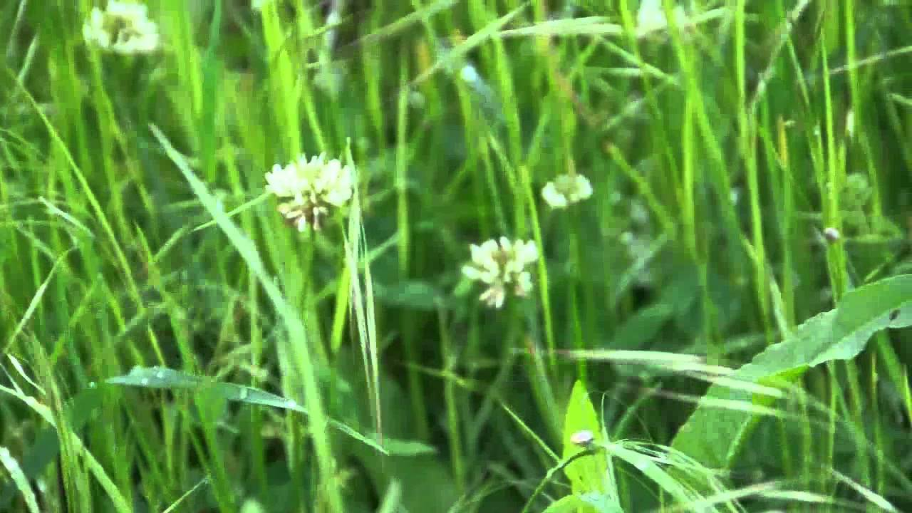 White Flowers And Grass Youtube
