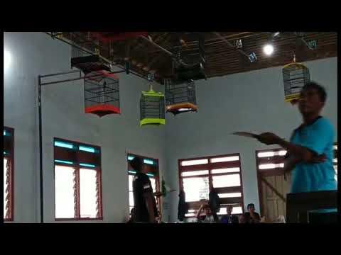 Download Lagu LOMBA KICAU BURUNG KENARI DI GANTANGAN INDOOR NGANJUK JAWA TIMUR #1
