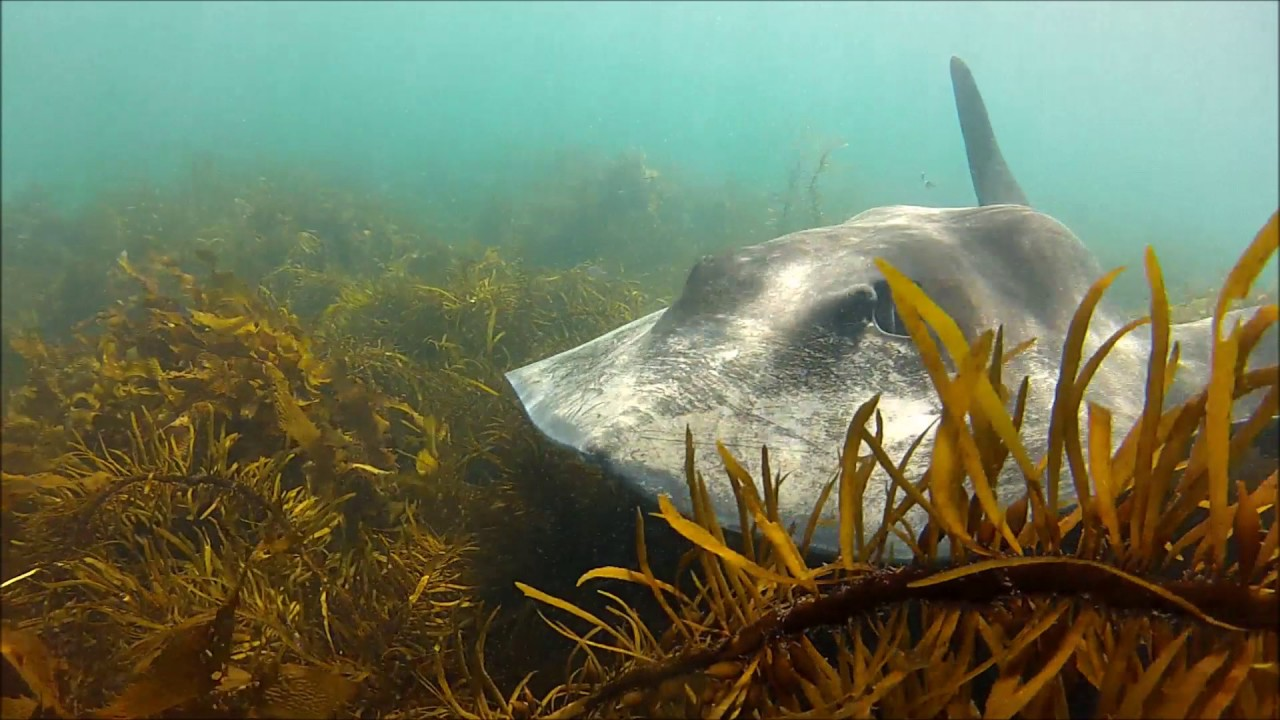 Freediving in Tasmania