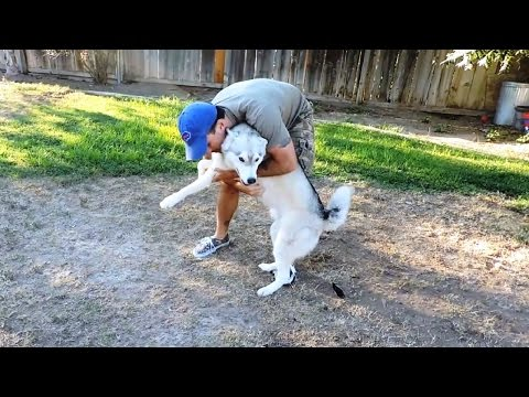 """Dogs Welcoming Owners Home Compilation"" 