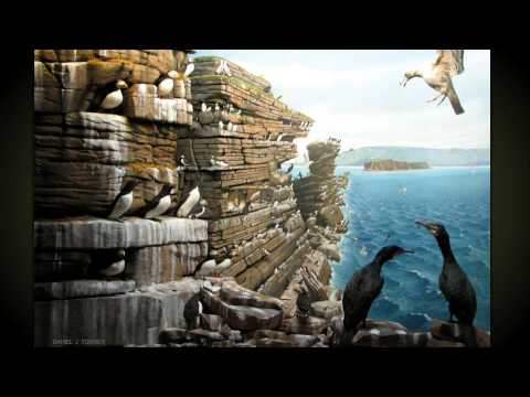 Museum of Natural History in Halifax Wild Birds Virtual Tour 3D slideshow