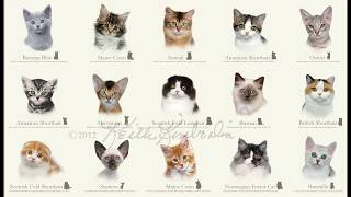 Породы котов))))