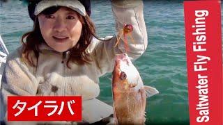 正月には鯛 Tai Rubber で香川県三豊市の荘内半島を中心に マゴチ. 真鯛...