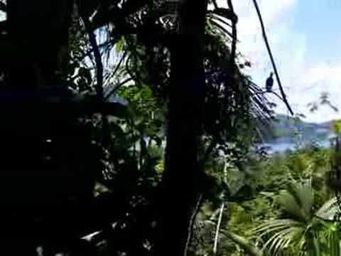 Panama Isla Grande