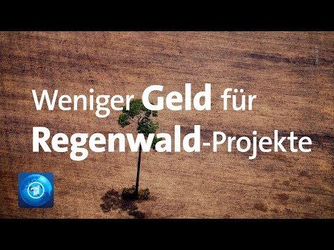 Bundesregierung stoppt Regenwald-Projekte