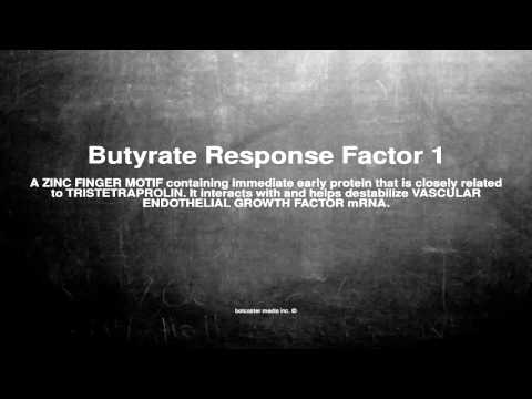 Medical vocabulary: What does Butyrate Response Factor 1 mean