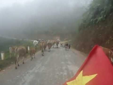 Đoạn đường rừng thông Yên Minh - Hà Giang ( tháng 11 - 2012)