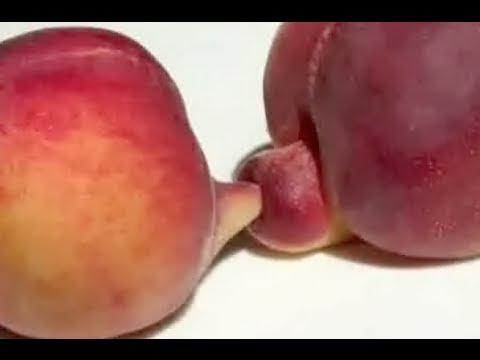 Fruit and veg porn