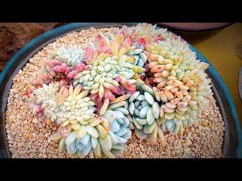 (Eng)사장님 좋은 다육이 매장 투어 #3!!!Korean Succulent Store Tour #3 (多肉植物)(たにくしょくぶつ)