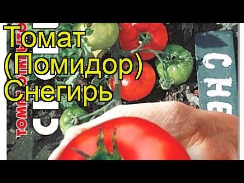 Томат Снегирь. Краткий обзор, описание характеристик, где купить семена solanum lycopersicum Snegir