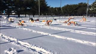 Rowan Men's Swimming and Diving: Snow Swim thumbnail