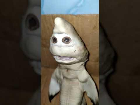 Video: Ikan Berwajah Menyerupai Manusia Hebohkan Warga Rote Ndao, Begini Penampakannya