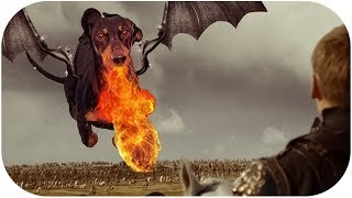 DRACARYS! Funny Game Of Thrones dachshund dog video!