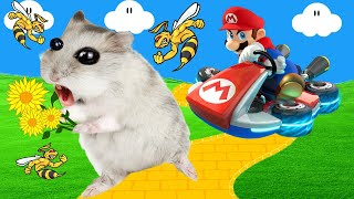 🐹 Hamster & Talking Angela Escapes Mario & Bee Obstacle Course! 🐹 Real Life Hamster