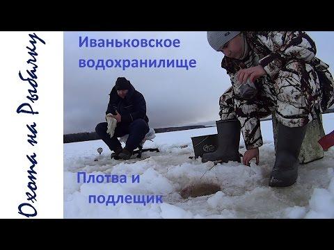 ловля плотвы на иваньковском водохранилище зимой