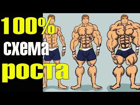 Мышцы начнут расти даже у дрища!