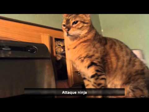 The real cat slap! - FUS RO DAH!