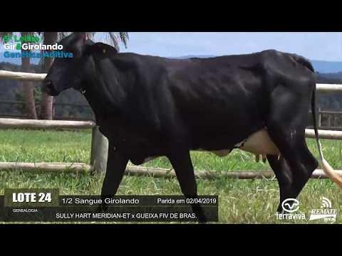 LOTE 24 - REM HISTÓRIA MERIDIAN FIV - REM0346 - 4273-AV - 5º LEILÃO GIR E GIROLANDO GENÉTICA ADITIVA
