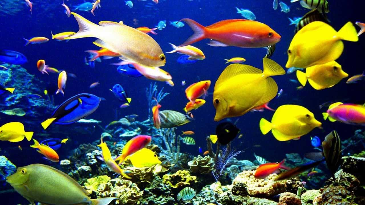 Interpretar sue os significado de so ar con peces - Bruguer colores para sonar ...