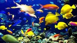 Interpretar sueños - Significado de soñar con peces