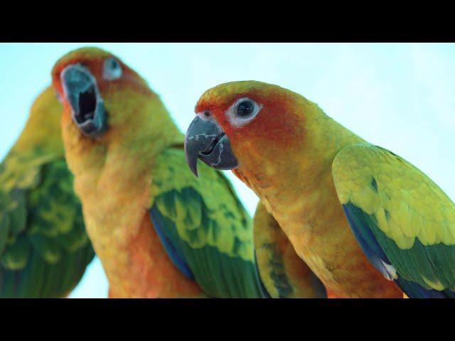 Virtual Bird Farm Visit