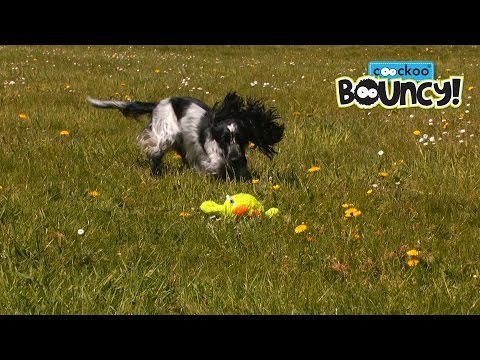 * Coockoo Bouncy - interactive dog toy - (Official dog toy product video - EN-de)
