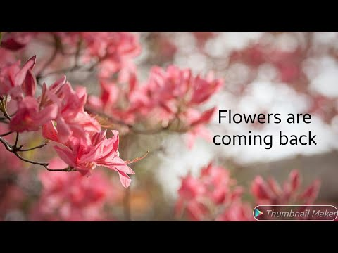 Flowers are coming back