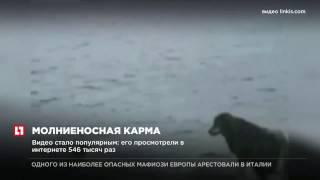 Хозяин, который хотел толкнуть собаку, поскользнулся и упал в воду