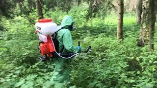 видео Как избавиться от короеда в саду, на участке, деревьях, цена, как избавиться от личинок короеда