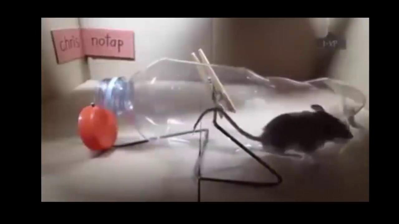 Top Inventions de Pièges à rat et souris fais maison - YouTube