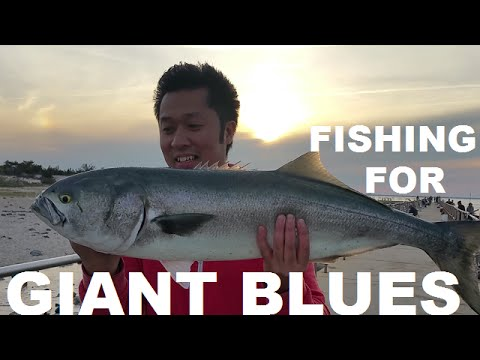 Fishing For Giant Blues At Barnegat Lighthouse NJ 2016
