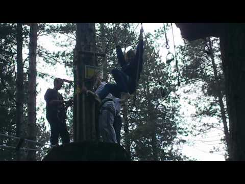 Go Ape Cats Fail