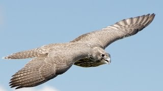5 FASTEST BIRDS on the planet!