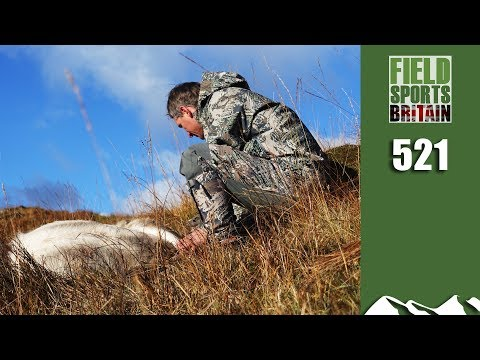 Fieldsports Britain - Scottish Deer Cull Crisis