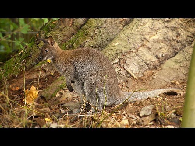 Tierpark Hirschfeld – Emu und Känguru erwarten Besucher