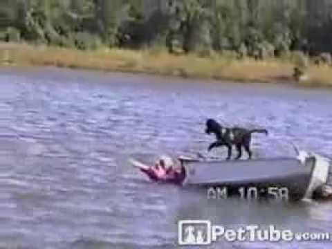 Lab on a Boat- PetTube