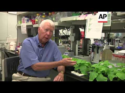 Doctor hunts for Ebola vaccine in genetically modified tobacco plants