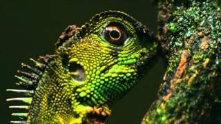 Belleza verde, les perruches de Yasuni