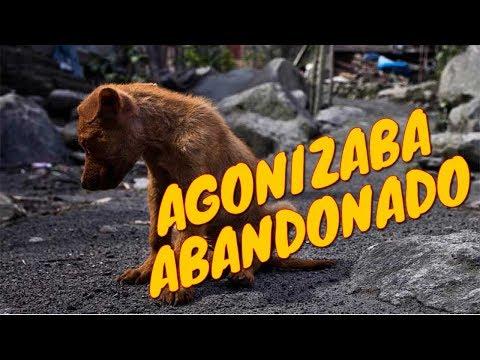 Sputnik: Un perrito rescatado | Tu Mascota TV