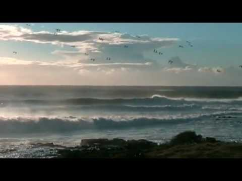 Another Look.Shellharbour Surf. Cowries. May 15 2010. .