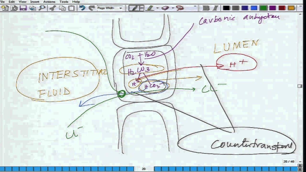 Mod-01 Lec-37 Animal Physiology