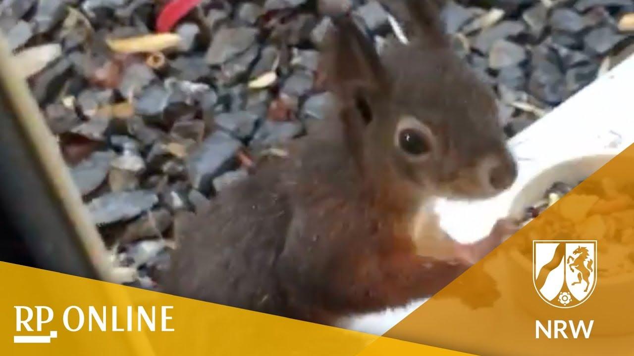 So Süß Eichhörnchen Machen Balkone Und Gärten Im Rheinland Und Am