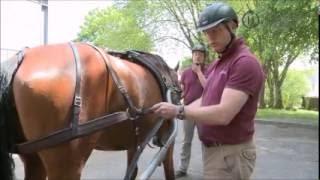 Attelage - Atteler son cheval - 2 - Traits et sous-ventrière