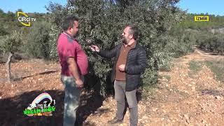 İzmir Selçuk tayız BİZİM KÖY Çiftçi TV