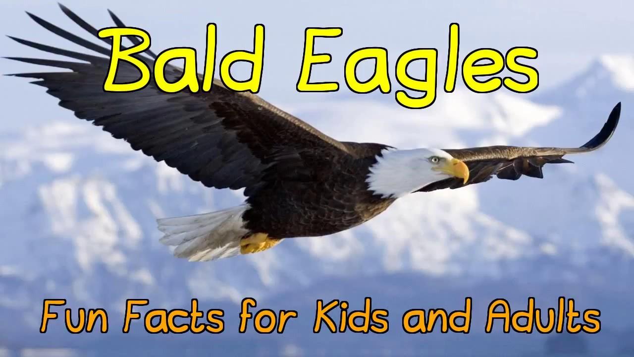 flamingo fun facts information kids